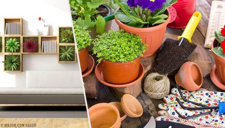 Bitki Dekorasyonu ile Evinizi Canlandırmak için 10 Öneri