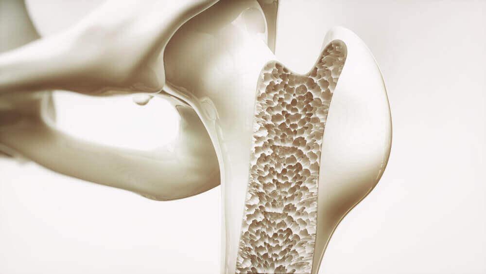 insan kemik yapısı