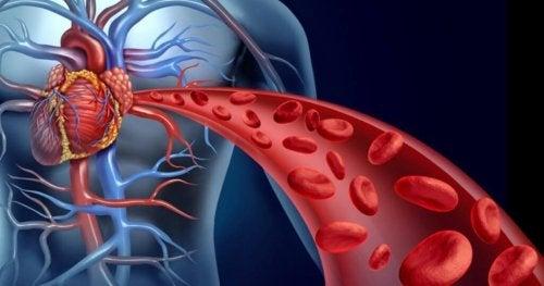 sağlıklı kan akışı
