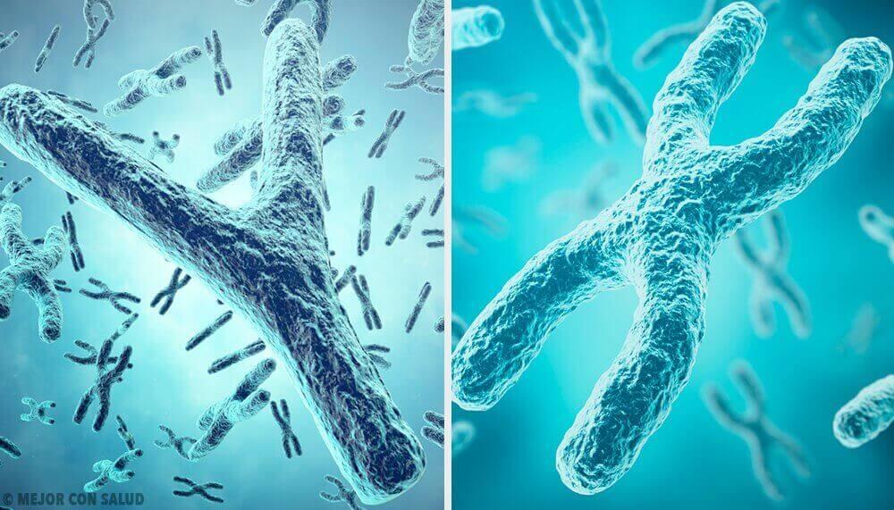 Cinsiyetin Genetik Kökeni: X ve Y Cinsiyet Kromozomları