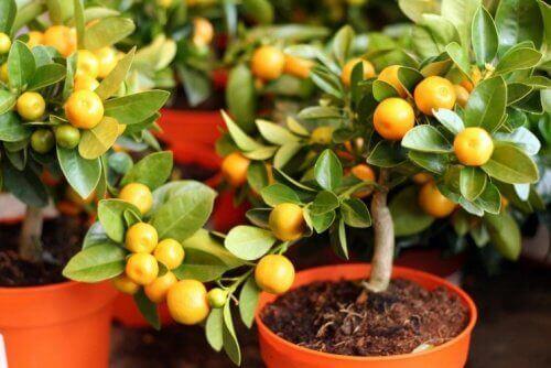 saksıda küçük bitkiler