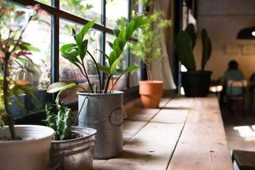 Evinizdeki Bitkilerin Sağlığınıza Faydaları