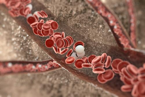 arter duvarlarında kan akışı