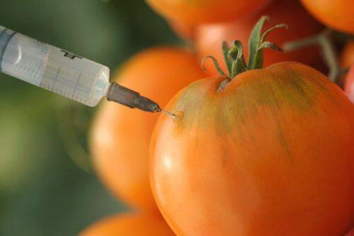 domates aşı genetik kanserojen