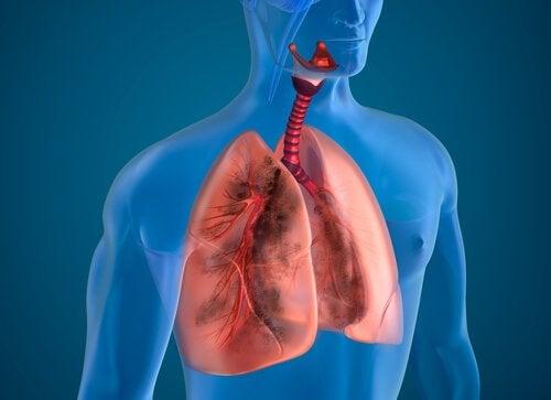 Bu Gıdaları Tüketerek Akciğerlerinizi Optimize Edin