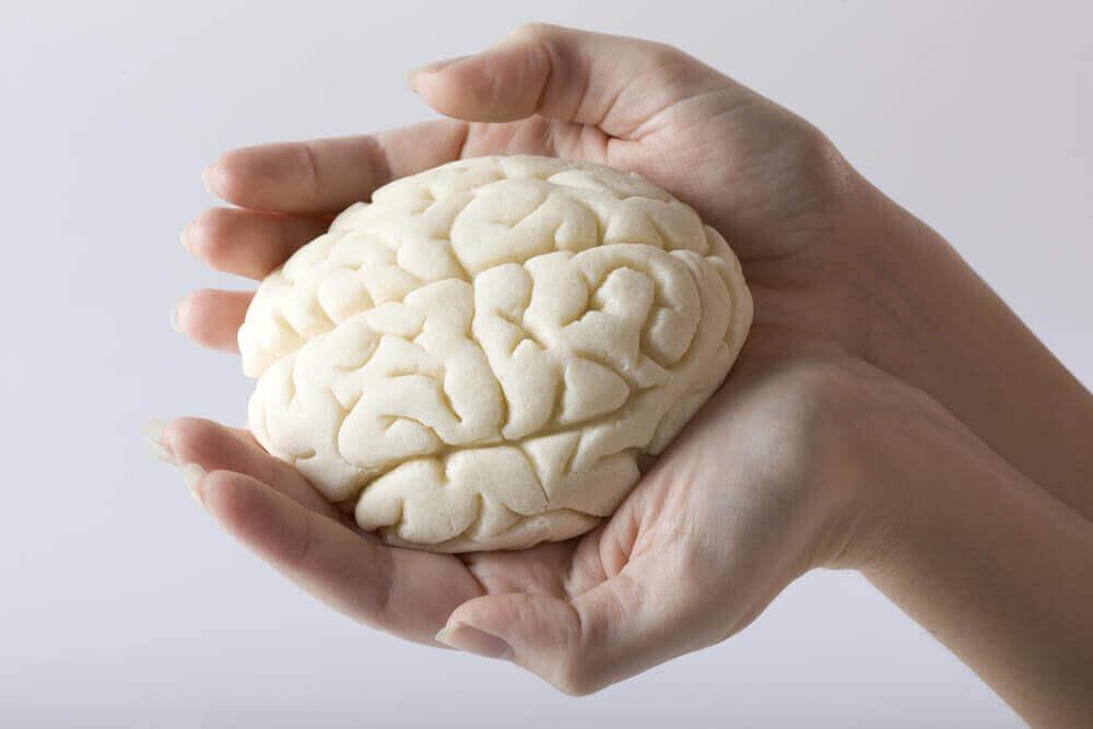 beyin fonksiyonu