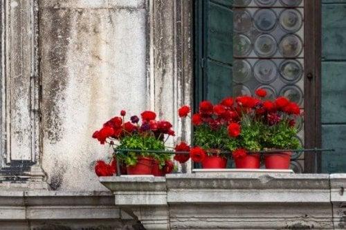 Balkonlar İçin İdeal 5 Çiçek Türü
