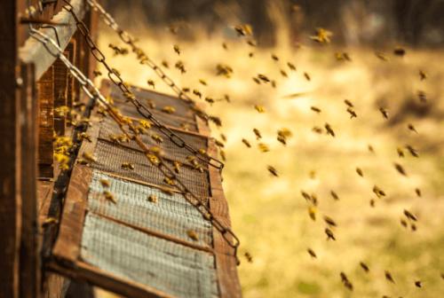 bir kovandaki arılar