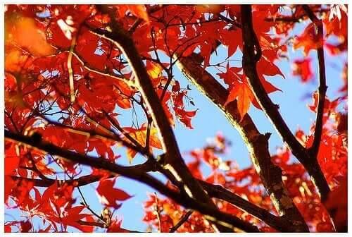 dallarda turuncu sonbahar yaprakları