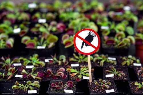 7 Tehlikeli Bitki: Bunları Evde Bulundurmamalısınız