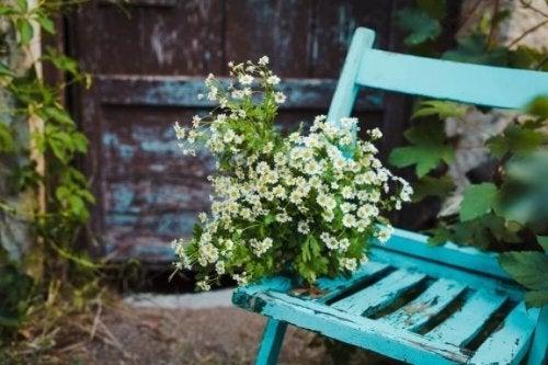 eski mobilya ve çiçek