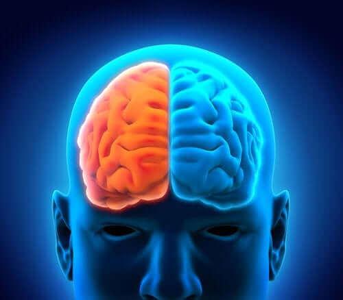 beyin sağ ve sol lob ilüstrasyonu