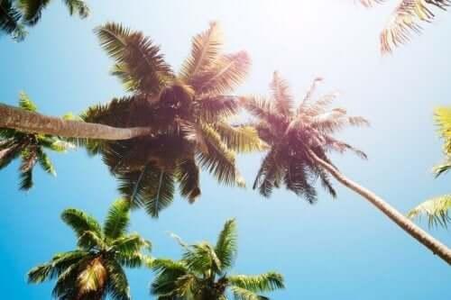 hindistan cevizi ağaçları