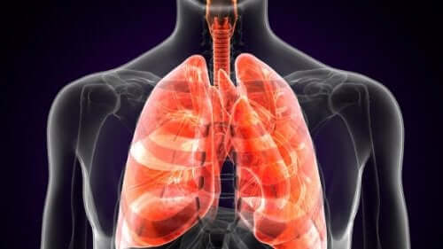 Pulmoner Veba Nedir?