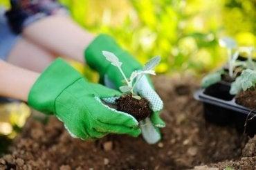 Bitki Bakımı: Yeniden Dikerken Bunları Unutmayın