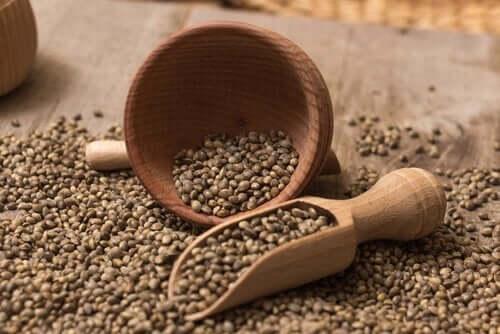 kenevir tohumları