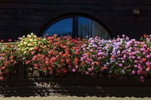 Kokulu Çiçekler ile Küçük Bir Bahçe