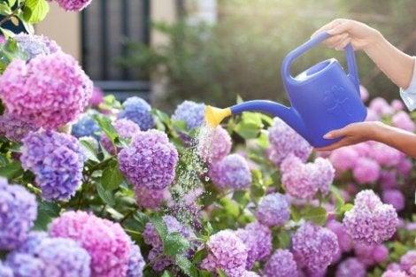 kokulu çiçekler içinden leylak
