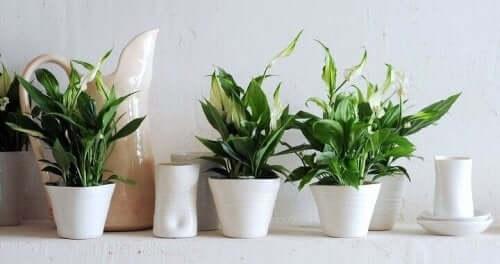 saksıda bitkiler