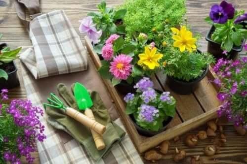 saksıda çiçekler bitki bakımı