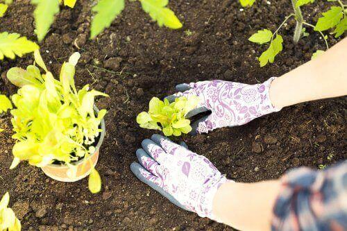 toprak bitki dikme işlemi