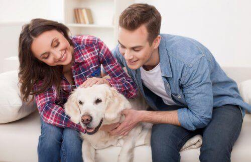 Evcil hayvanlarını sevmekte olan bir çift.