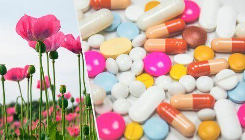 Opioid özellikli bitki ve ilaçlar.