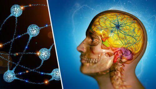 beyin hücreleri ve nöronlar