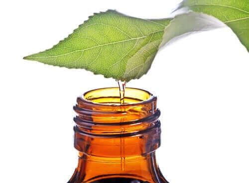 Yapraktan şişeye akan çay ağacı yağı.
