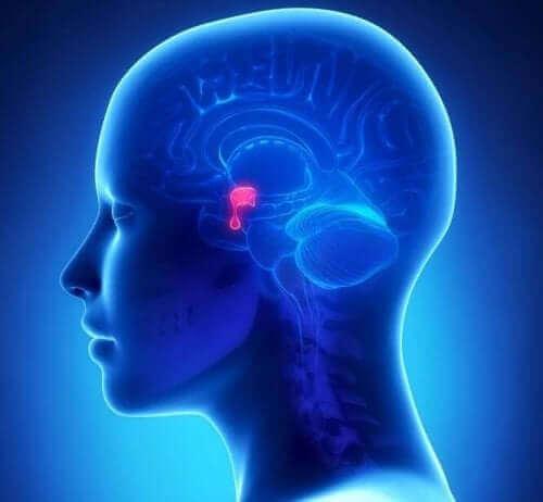 hipofiz adenomları