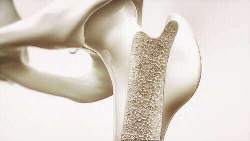 Kemik içi yapı
