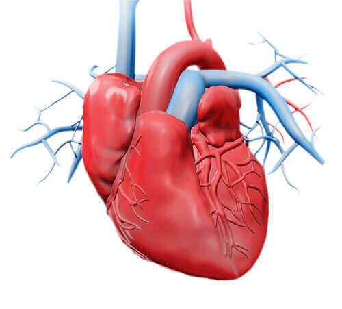 kırmızı kalp ve mavi damarlar