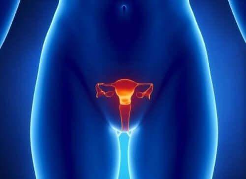 vajina görseli ve prematür overyan yetmezliği