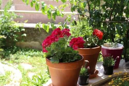 Yaz Çiçekleri: Bahçeniz İçin Altı Seçenek