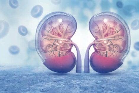 Yüksek tansiyon tedavi edilmezse başta böbrekler olmak üzere pek çok organa hasar verebilir.