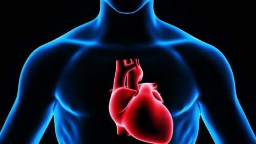 Kalbin insan vücudundaki yerini gösteren bir illüstrasyon.