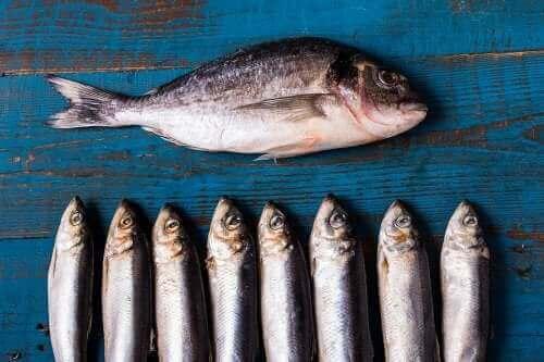 bir bütük balık ve altında sıralanmış daha küçük balıklar