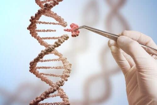 DNA dizilim parça