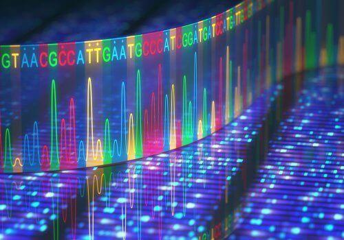 DNA renkli iç yapı