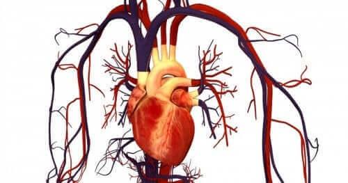 Kalp ve kalbe gelen damarların çizimi