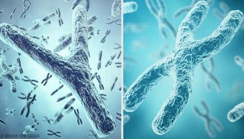 kromozomlar telomerler