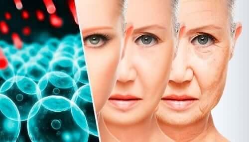 yaşlanma süreci gen