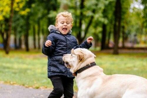 Çocuğum Hayvanlardan Korkuyor, Ne Yapmalıyım?
