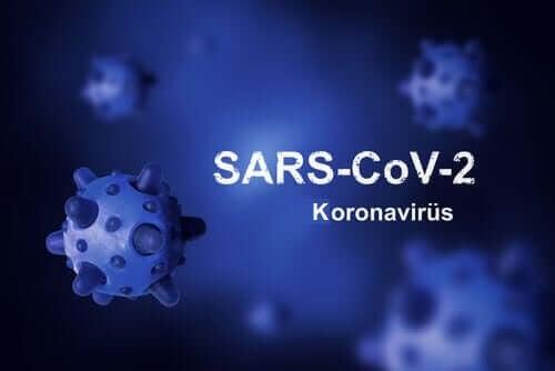 Koronavirüsün Kökeni Nedir ve Neden Onu Yok Edemedik?