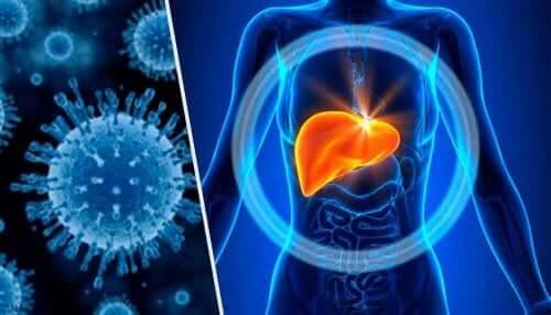 karaciğer metabolizması