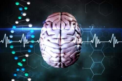 serebral herniasyon semptomları
