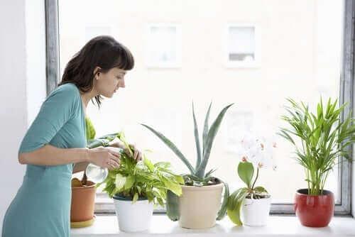 Bitkilerini sulayan bir kadın.