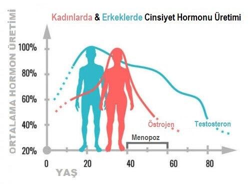 Cinsiyet Hormonları Ne Yapar?