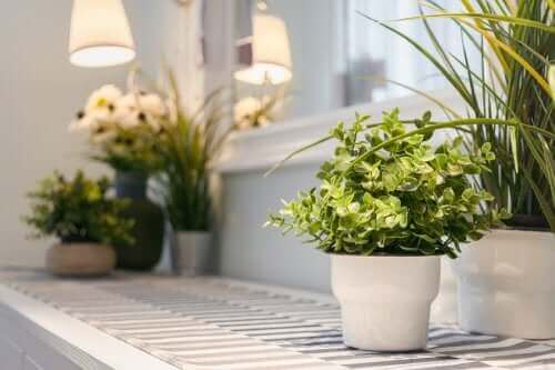 Ev bitkileri.
