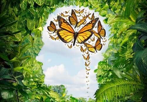 kelebek sürüsü